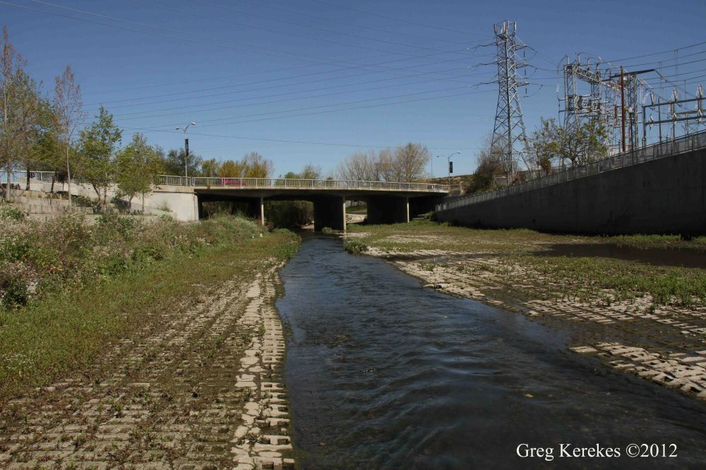 Urban Stream: Guadalupe River at Coleman Avenue