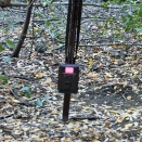 This is one of our tools we use to research wildlife, the trail camera.