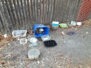 Cat Feeding Station Adobe Creek