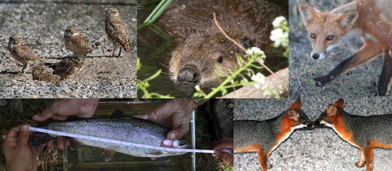 Urban Wildlife Research Project